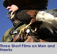 3 Short Films on Hawks and Men