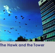 The Hawk and the Tower